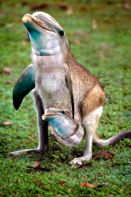 Dolphin Kangaroo Photoshop