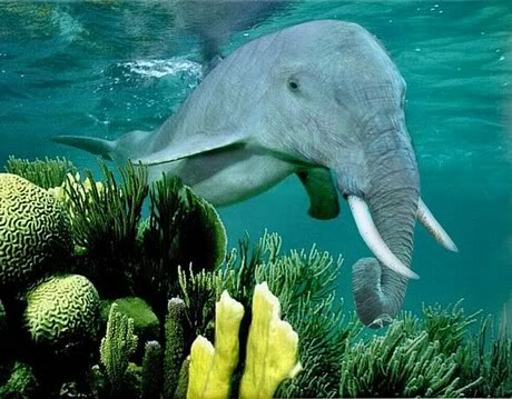 Elephant Dolphin Photoshop
