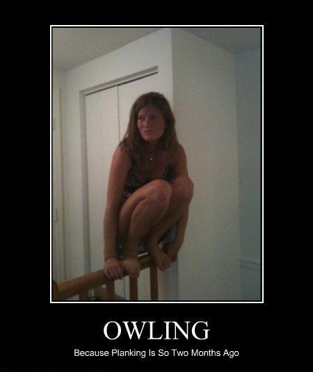 Owling-is-the-new-planking