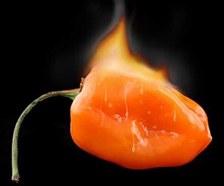 hot-habanero