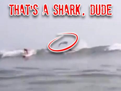 shark-jumps-surfer