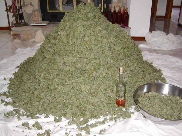 Weed Mountain